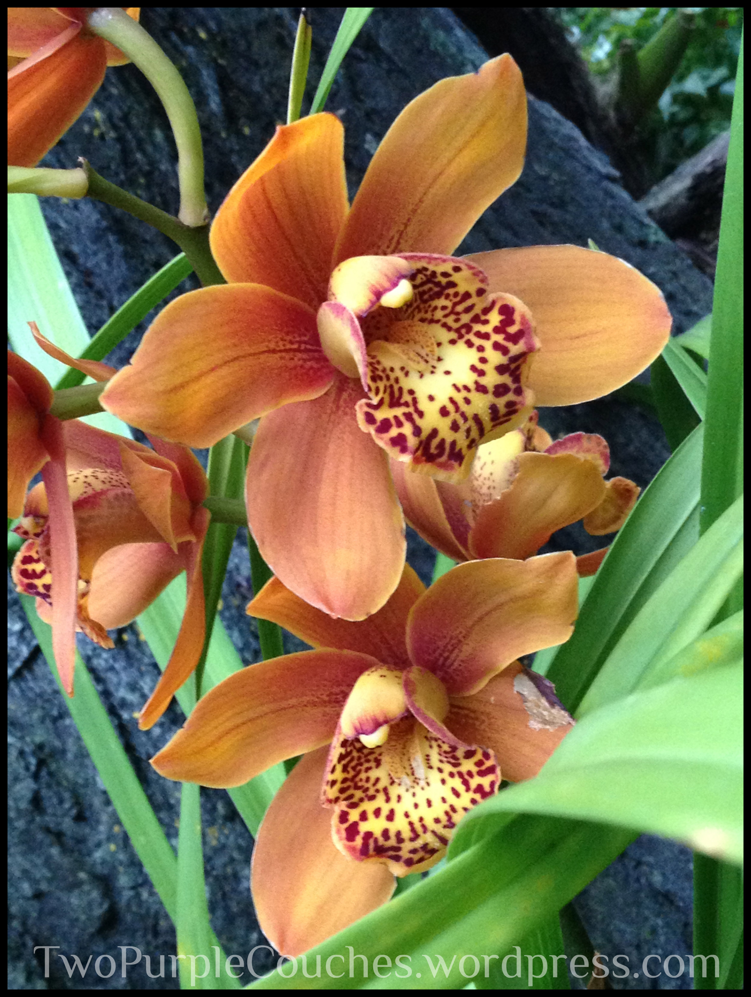 orange orchid - Two Purple Couches
