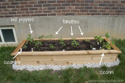 planted veggie bed
